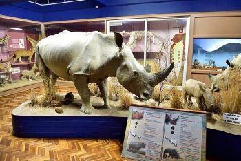 Bloemfontein National Museum, Bloemfontein, Free State